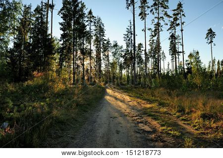 a dirt broken road in the forest