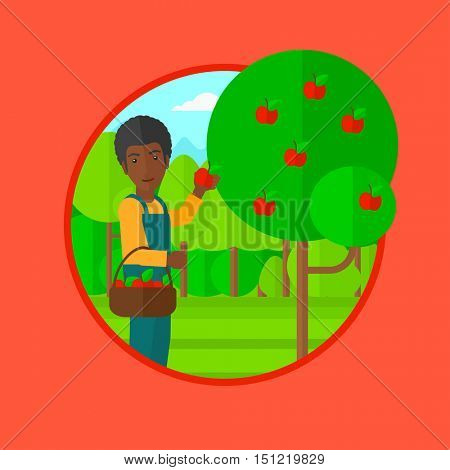 An african-american man holding a basket full of apples. Young gardener harvesting apples. Young male farmer collecting apples. Vector flat design illustration in the circle isolated on background.