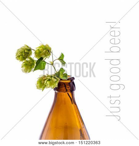Beer bottle with hop branch, isolated on white