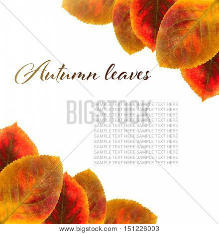 Text AUTUMN LEAVES and yellow foliage on white background.