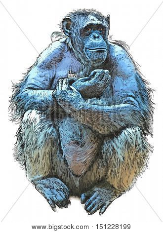 Sitting Monkey - chimpanzee. Color vector drawing