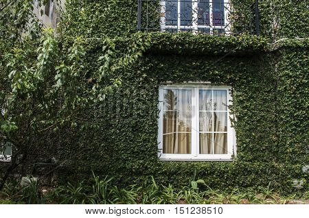 Irish Cottage With Green Wall Surface