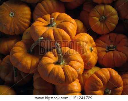 One dozen small orange baby jack pumpkins