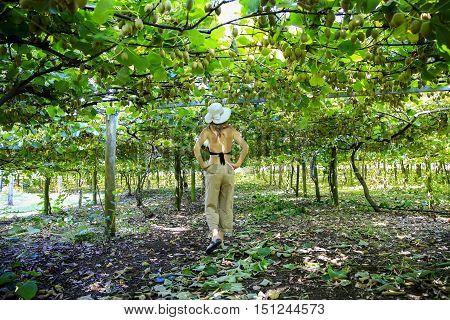 Young cucasian woman in a hat enjoying Kiwis growing in large orchard in New Zealand. Kerikeri.