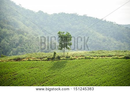 Lonely tree and beautiful green field on the hill or mountain - can use for background in natural environment ot health concept