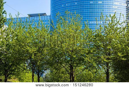 Tall Grown Trees In Front Of High Office Building