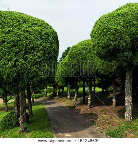 Fukuoka - July 2016: Path with shaped trees at Nokonoshima Island Park.