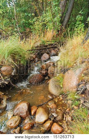 Wild forest brook with rapids and boulders