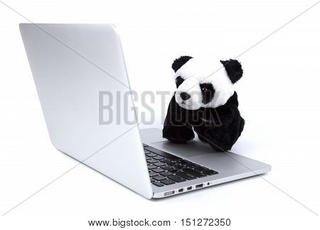 Panda bear look at computer laptop on white isolated
