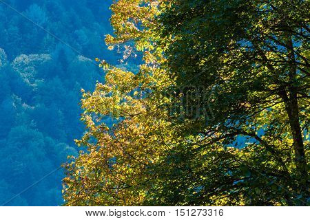 Autumn Scene In The Mountains Of Abkhazia.