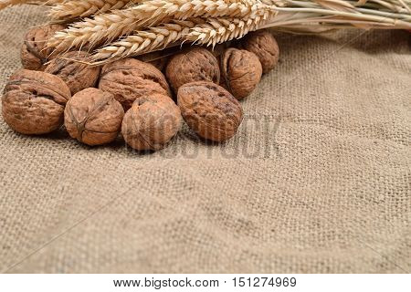 Whole And Unbroken Walnuts And Dried Ears Of Wheat On Jute Background. Healthy Food. Selective Focus