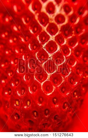 Ripe red fresh strawberry or Frugaria texture in a macro view of the fleshy receptacle covered with single seeded achenes