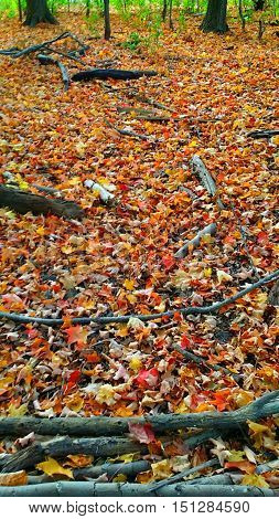 The trail floor all covered by  Autumn  colourful  falling  leaves and   broken  branches, forming a beautiful  and  emotional  scenic  background