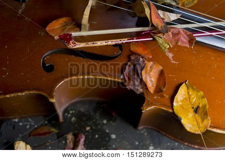 Cello laid on a ground covered with autumn leaves a bow in focus in the foreground. Studio closeup