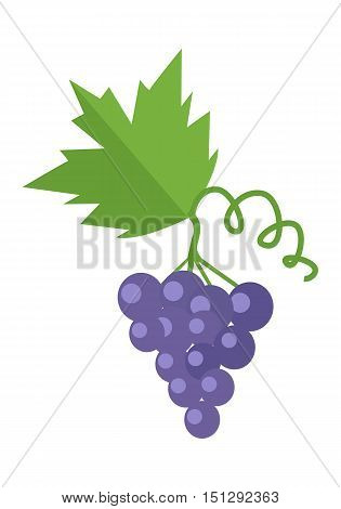 Bunch or cluster of red grapes. Blue grapes with a leaf. Vector poster