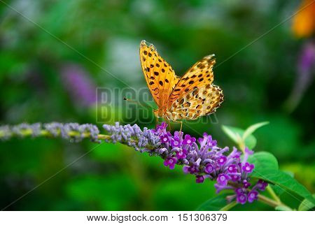 The butterfly and flower closeup background and texture