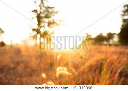 orange Nature blur abstract background / Abstract nature background.blurred nature background