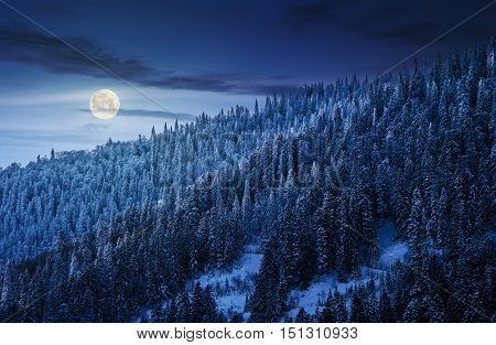 Magnificent Forest In Winter Mountains At Night