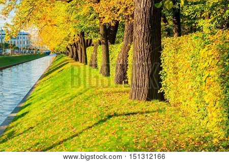 Autumn landscape of St Petersburg - Swan Canal and autumn park with golden autumn trees in sunny weather. Colorful autumn sunset view of autumn trees - autumn nature with fallen autumn leaves