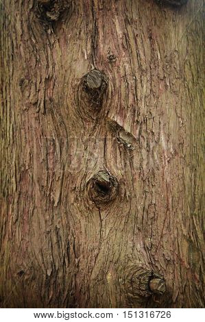 Background of natural wood surface. Bark of tree