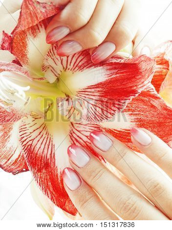 beauty delicate hands with pink Ombre design manicure holding red flower amaryllis close up isolated warm macro perfect shape
