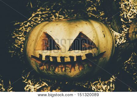 Vintage Halloween pumpkin vegetable with scary face in yard. Retro jack-o-lantern.