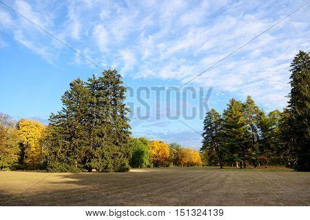The glade in autumns yellow colors Olexandria Park Bila Tserkva Ukraine