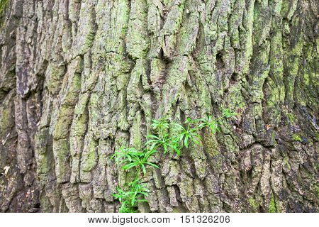 Close up of the tree bark with green moss.
