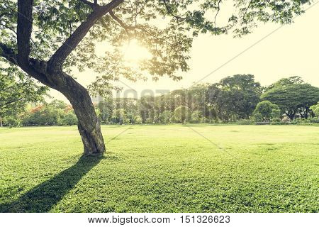 Park Trees Environmental Ecology Nature Concept