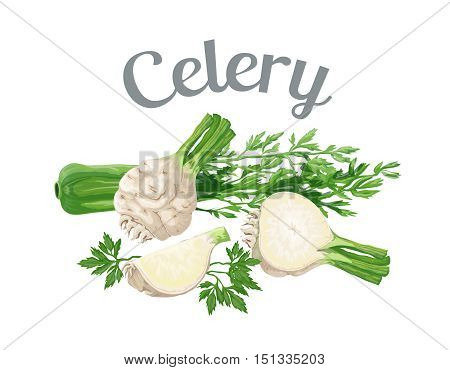 Celery. Vector illustration made in a realistic style, isolated on white background.