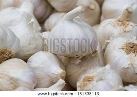 Garlic background. White cloves of organic spicy vegetables