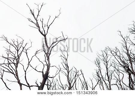 Bushfire Damaged Trees