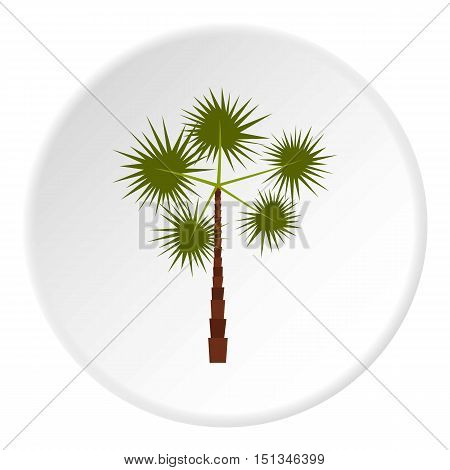 Spiny tropical palm tree icon. Flat illustration of spiny tropical palm tree vector icon for web