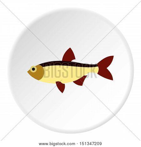 Salmon icon. Flat illustration of salmon vector icon for web