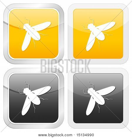 Square Icon Insect