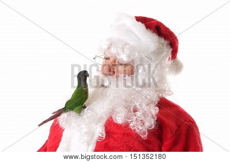 Santa Claus with a cute Green Cheek Conure Bird.  The bird is perched on his beard and Santa is looking at it.
