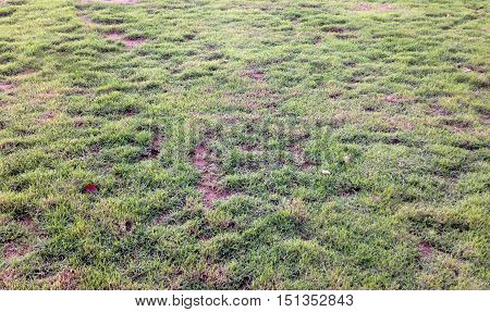 lawn in bad condition and need maintaining