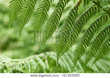 Fresh Green Ferns Background