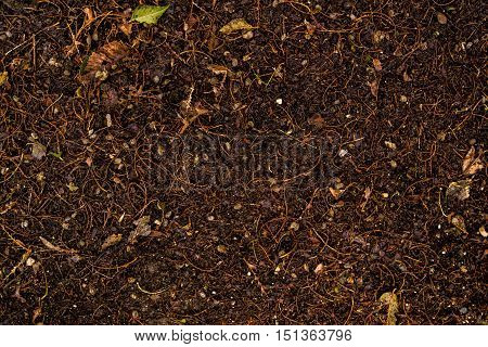 Soil, ground, wet soil texture, wet ground, dry grass on the ground