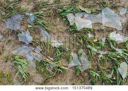 Ice Debris