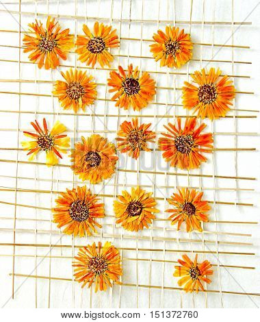 Bright yellow multicolor pressed chrysanthemum flowers under the grate of straw oil draw painting photo manipulation