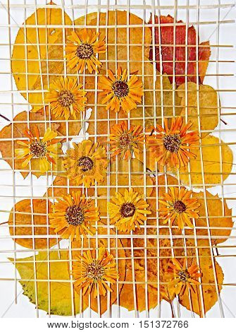 Bright yellow multicolor pressed decorative leaves and chrysanthemum flowers under the grate of straw oil draw painting photo manipulation