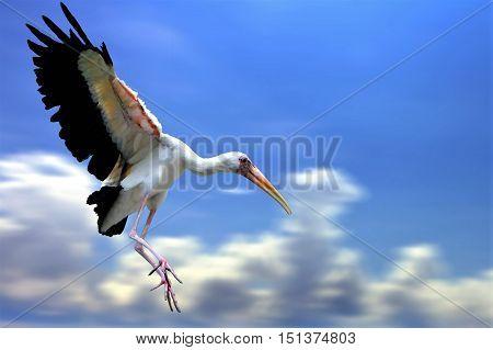 Mycteria bird flying under blue cloudy sky