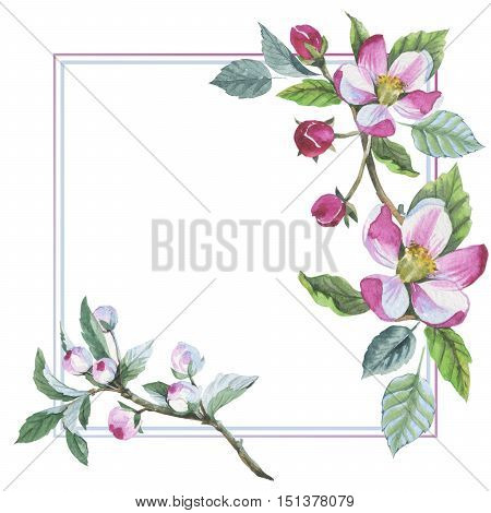 Wildflower apple flower frame in a watercolor style isolated. Aquarelle wild flower for background, texture, wrapper pattern, frame or border.