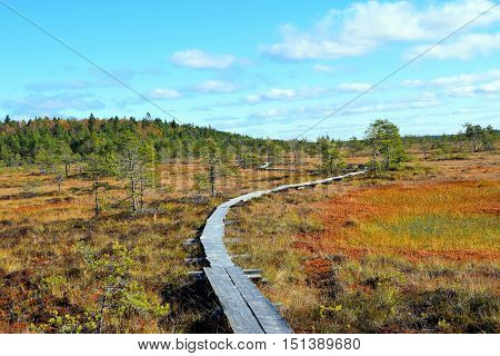 Colorful autumn landscape on bog Torronsuo National Park, Finland