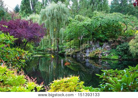 In a small pond, overgrown with lilies, reflected trees and flowers. Amazing floral park Butchart Gardens on Vancouver Island