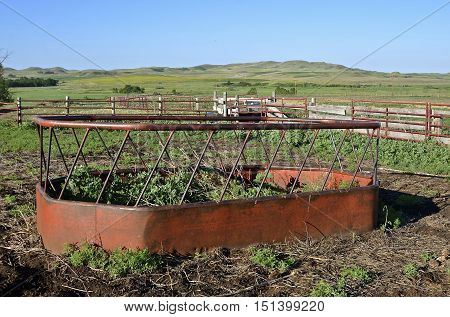 Old cattle feeder for holding hay for beef animals in an abandoned feedlot is overtaken by weeds