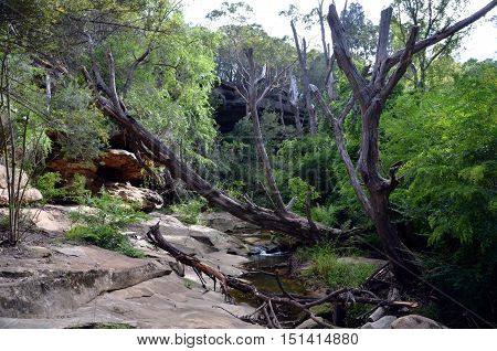 Bushwalking in Lane Cove National Park. Sydney NSW Australia