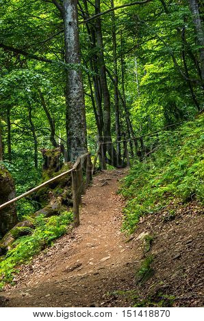 Narrow Mountain Path In The Deciduous Forest Along A Small Wooden Fence.