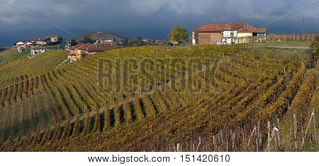 Piedmont Vineyards in the fall after harvest